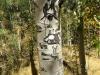 Old Arborglyph